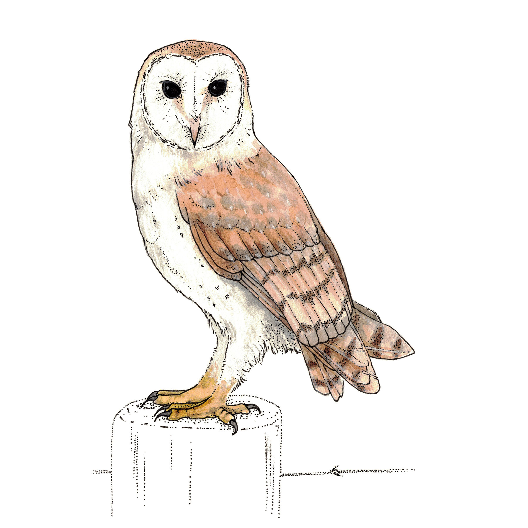 Membership Level - Owl