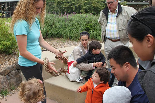 Live Animal activities for kids and families