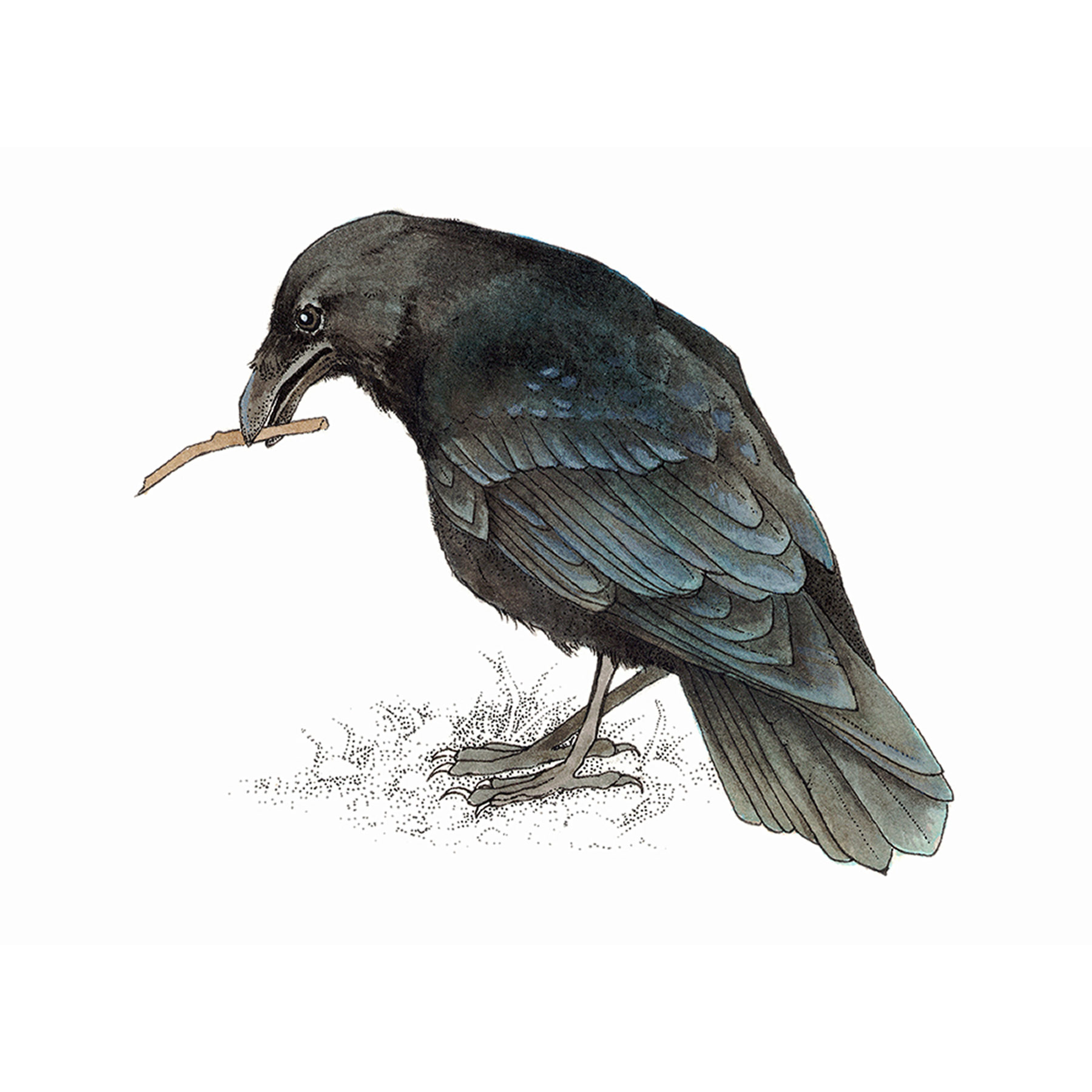 Membership Level - Raven